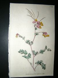 Curtis 1792 Hand Col Botanical Print. Glaucou's Fumitory 179